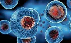 The Facts Behind Stem Cell Therapy