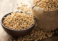 Essential Things to Consider in Buying From a Soybean Manufacturer
